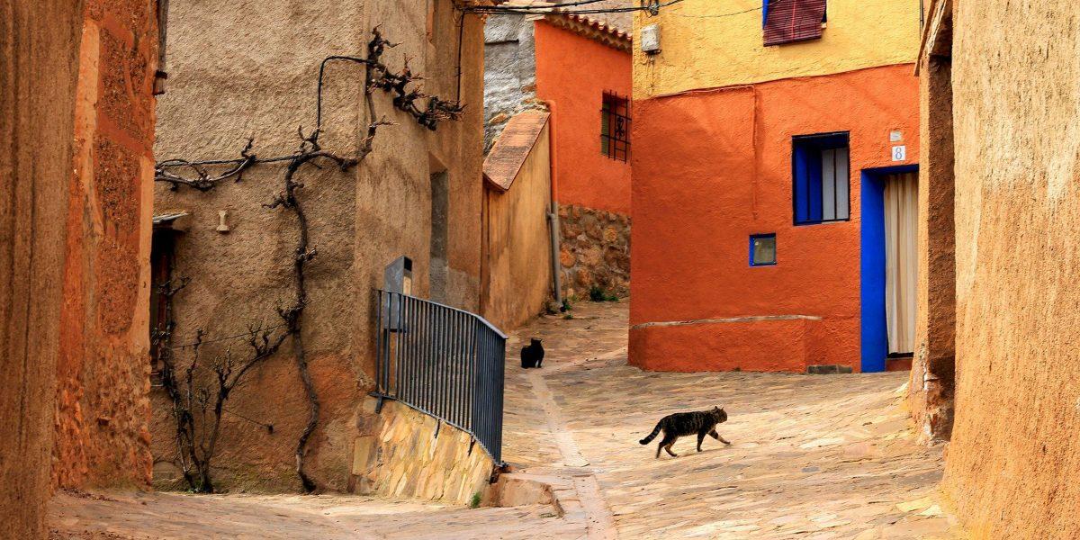 Spanish street cats