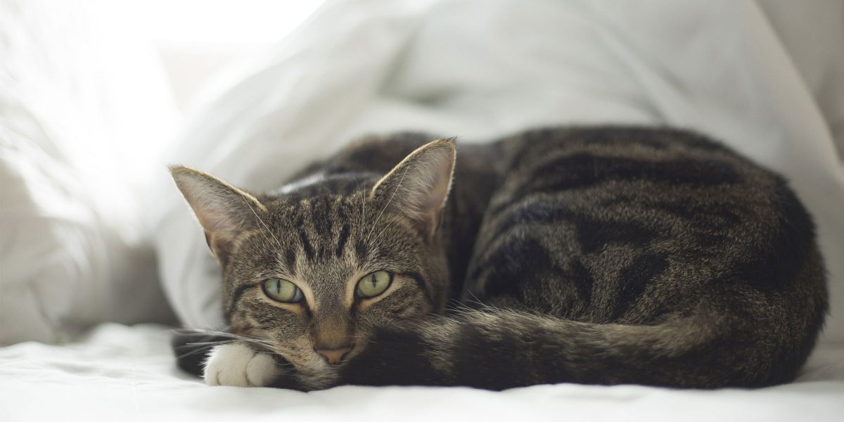 Keeping Cats Safe: Pica