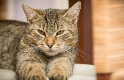 Stress reported as major barrier to cats visiting the vet