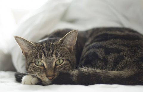 Keeping Cats Safe: Paracetamol