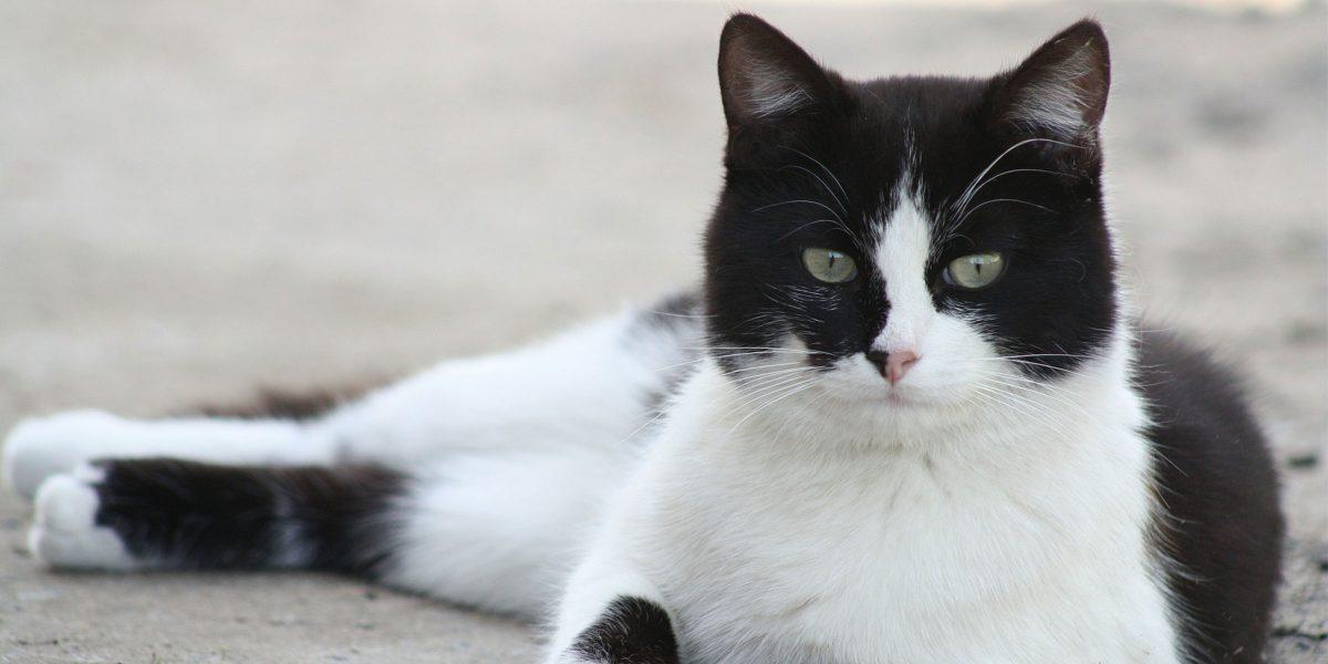 Keeping Cats Safe: Paracetamol video