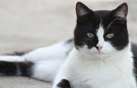 Keeping Cats Safe: Paracetamol video