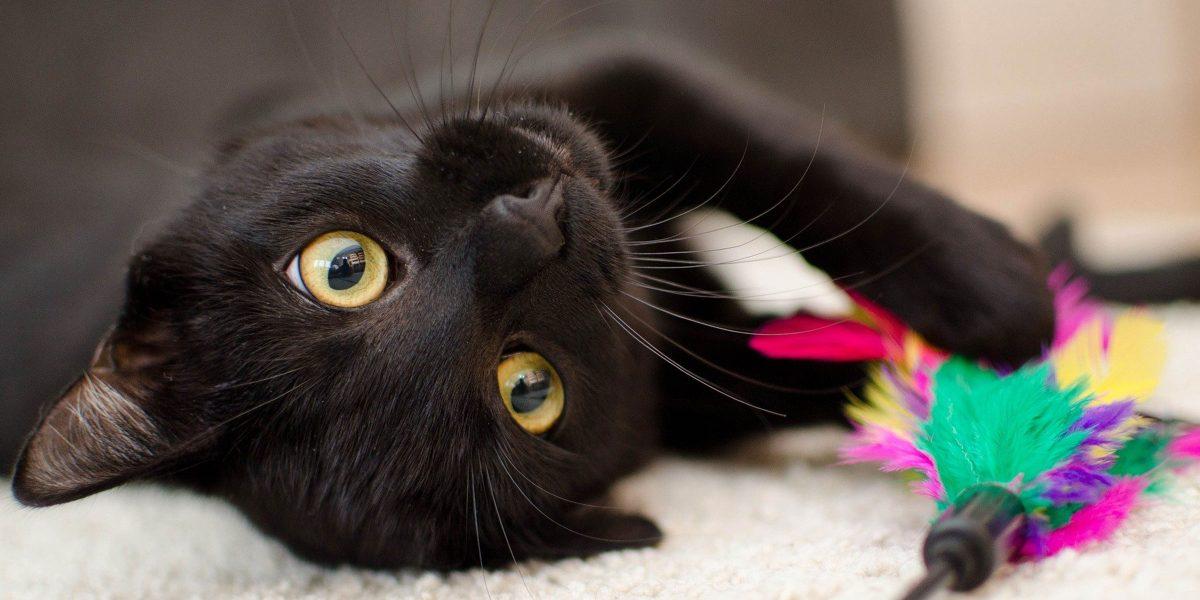 Celebrating National Black Cat Day