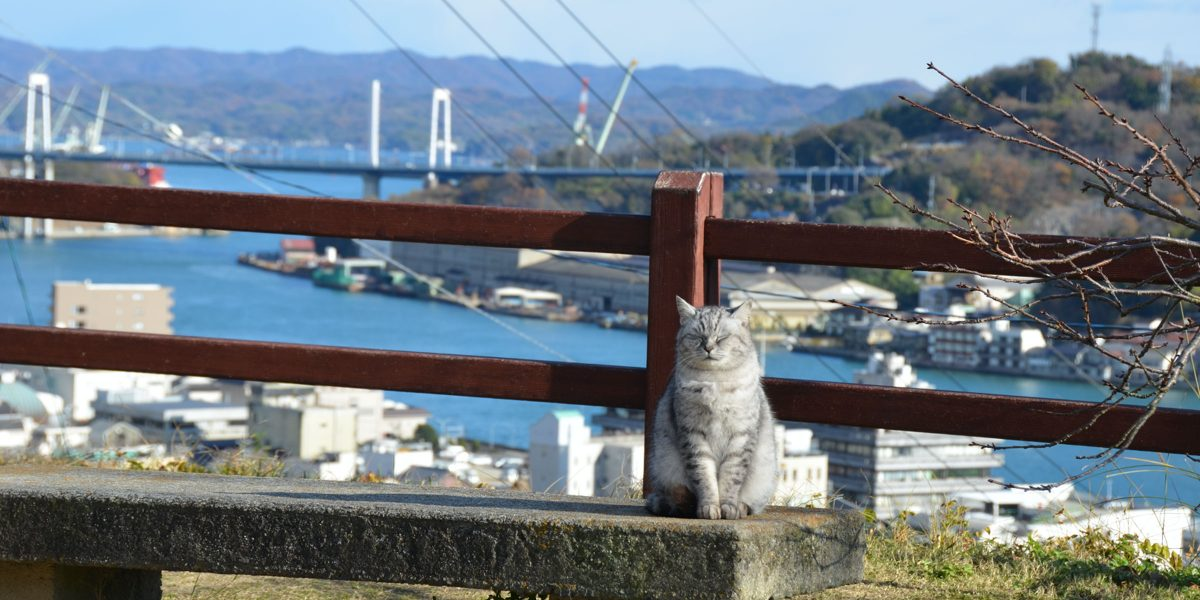 The effect of communal litter box provision on the defecation behaviour of free-roaming cats in old-town Onomichi, Japan