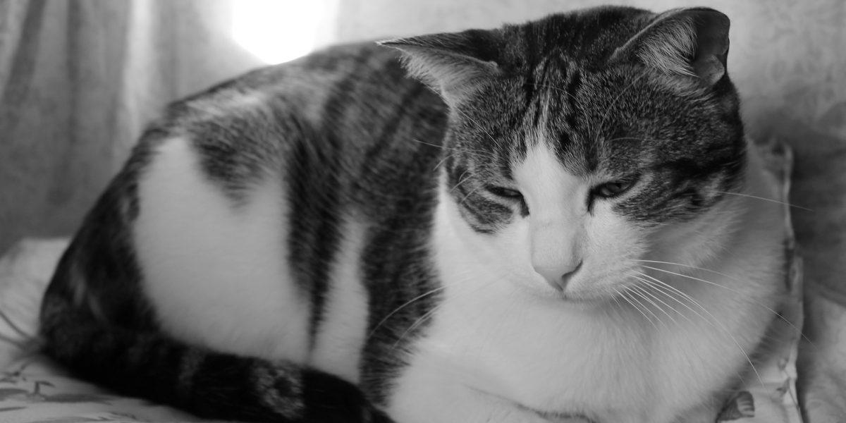 Top Tip: Handling the loss of a pet cat