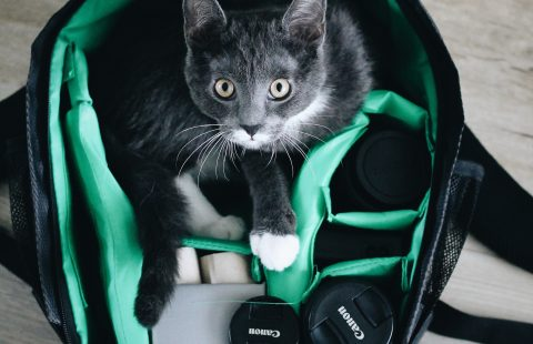 Top Tip: How to photograph cats