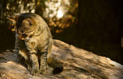 Top Tip: Make a cat friendly garden!