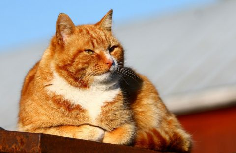 Spotlight on Science: Prevalence of Disease and Age-Related Behavioural Changes in Cats: Past and Present.