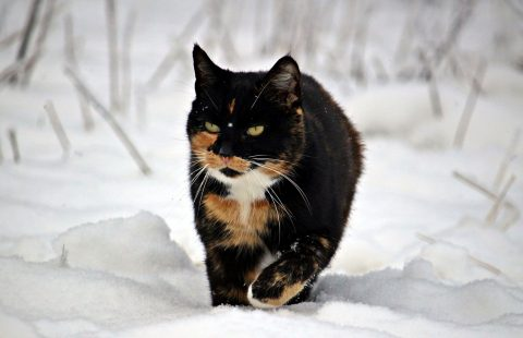 Keeping Cats Safe: Antifreeze