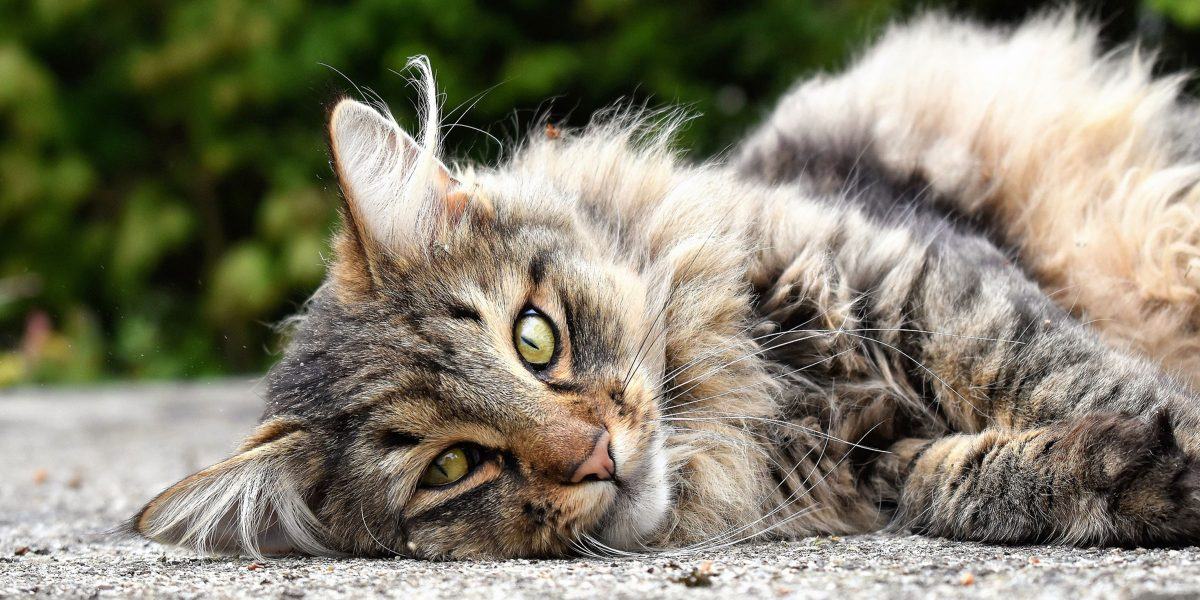 Spotlight on Science: Emotion recognition in cats