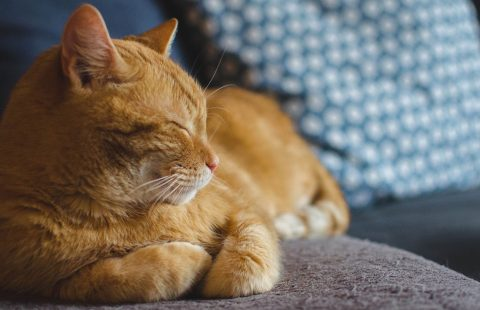 A look back at the trends affecting the mental wellbeing of cats in 2020 and predictions for 2021