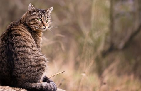 Cat Friendly Homing – What is an inbetweener?