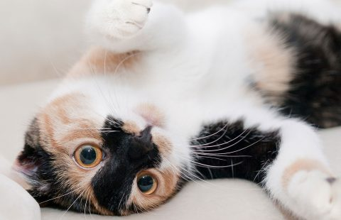 Hard to handle: how do cats respond to different types of handling?