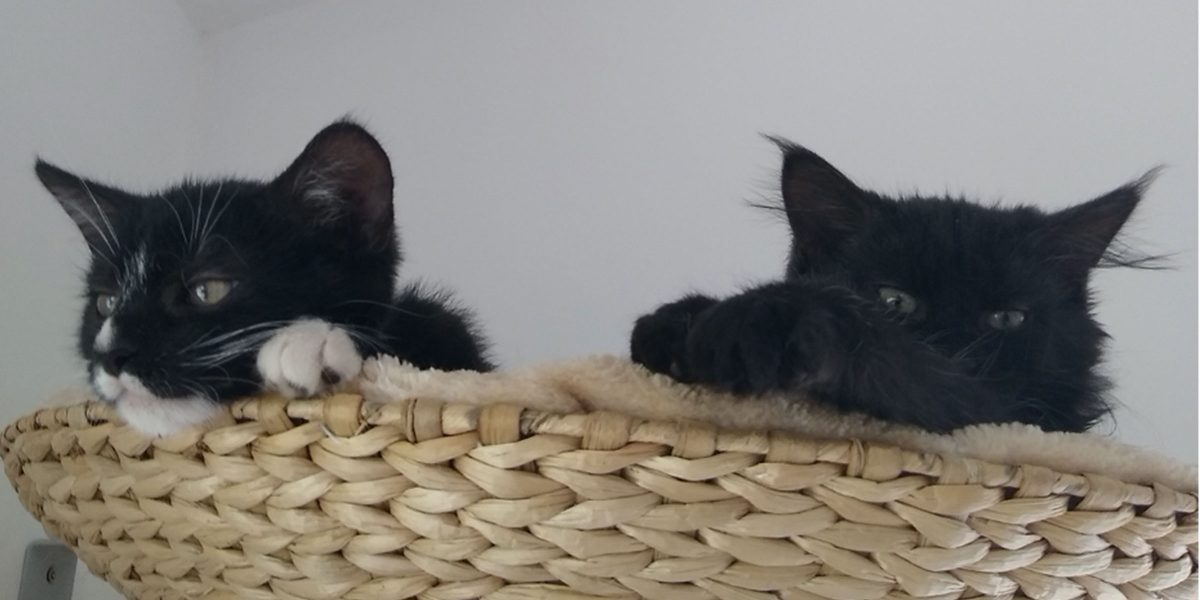 An interview with Dr Sarah Ellis on fostering cats in the UK