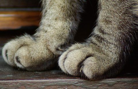 AAFP end elective declawing procedures for Cat Friendly Practices