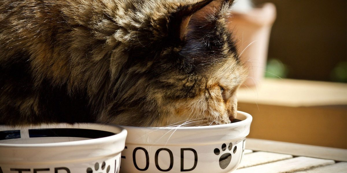 The evidence for frequent feeding of cats to promote positive welfare