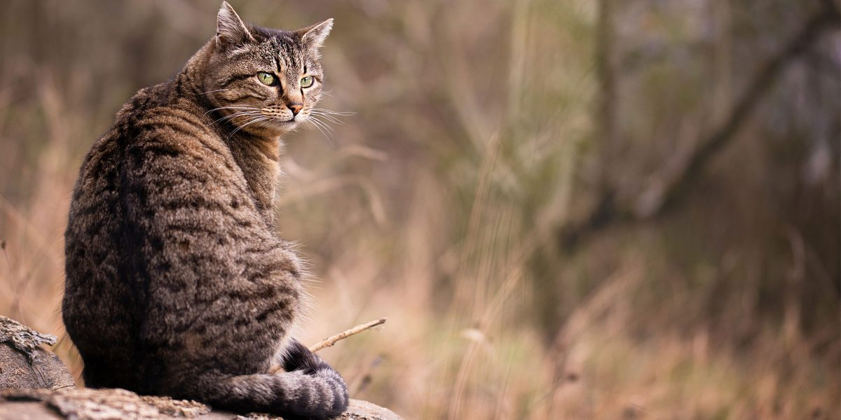 Interview with Leila Garcia about her experience with a deaf feral cat called Spirit