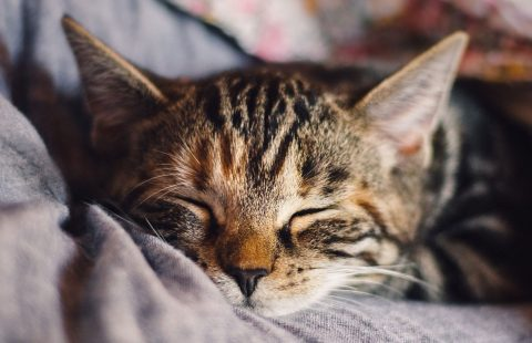 SoS: Owner personality and the wellbeing of their cats share parallels with the parent-child relationship