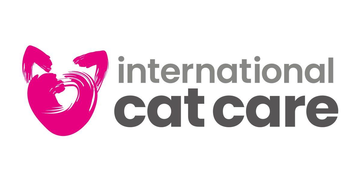 Belgian region ruled to ban the breeding of Scottish Fold cats