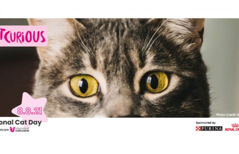 #BeCatCurious for International Cat Day on Sunday 8 August 2021