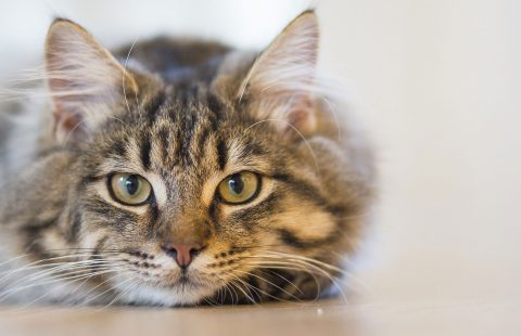 Campaignof disrupter adverts to expose distress in online cat videos